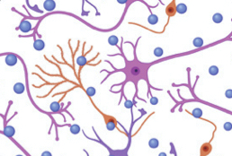 Machine learning identifies candidates for drug repurposing in Alzheimer's disease.